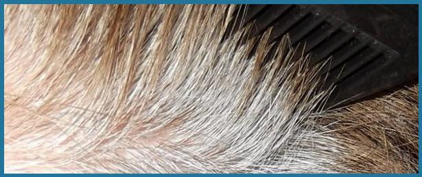 Graue Haare Färben Tipps Und Tricks Bei Ergrautem Haar