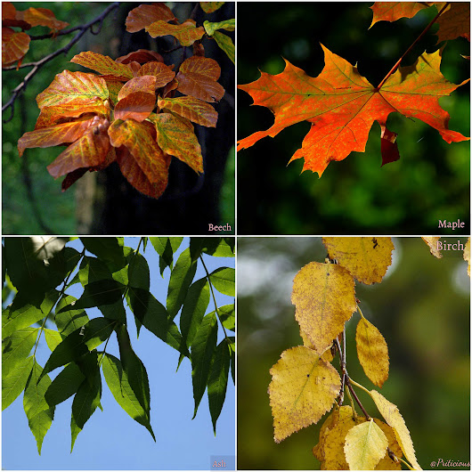 Which Tree leaves are good for compost