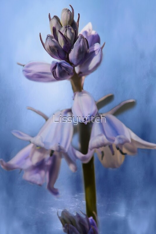 """Bluebells "" by Lissywitch 