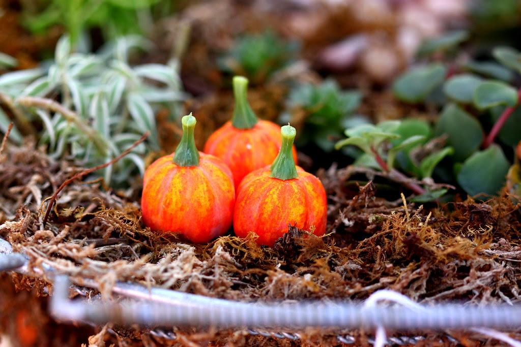 Tiny Pumpkin Scenario