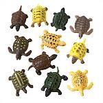 U.S. Toy 7725 Mini Turtles
