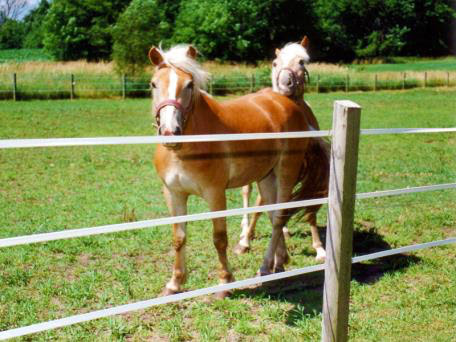 Nutrition Tips for Stallions and Broodmares
