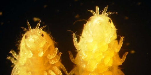 Tiny Sea Crustaceans Could Help Us Turn Wood Into Sustainable Biofuel - Seeker