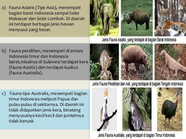 42 Contoh Gambar Hewan Fauna Australis Gratis