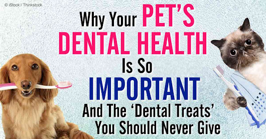 Before You Buy Pet Dental Treats, Read the Ingredient List