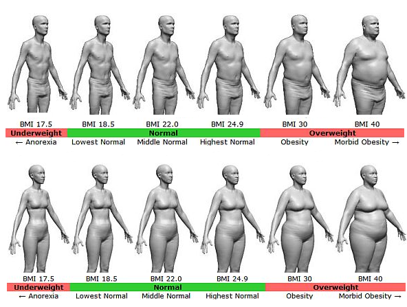 body fat percent diagram
