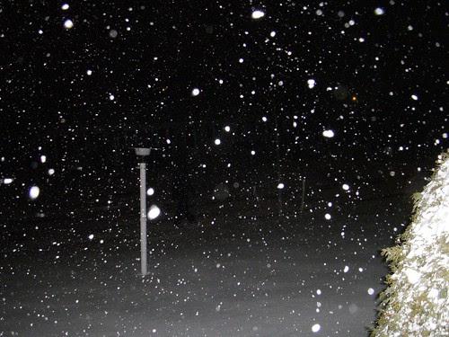 Narnia or My Front Yard?