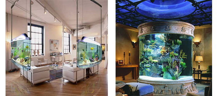 aquarium rental and maintenance business