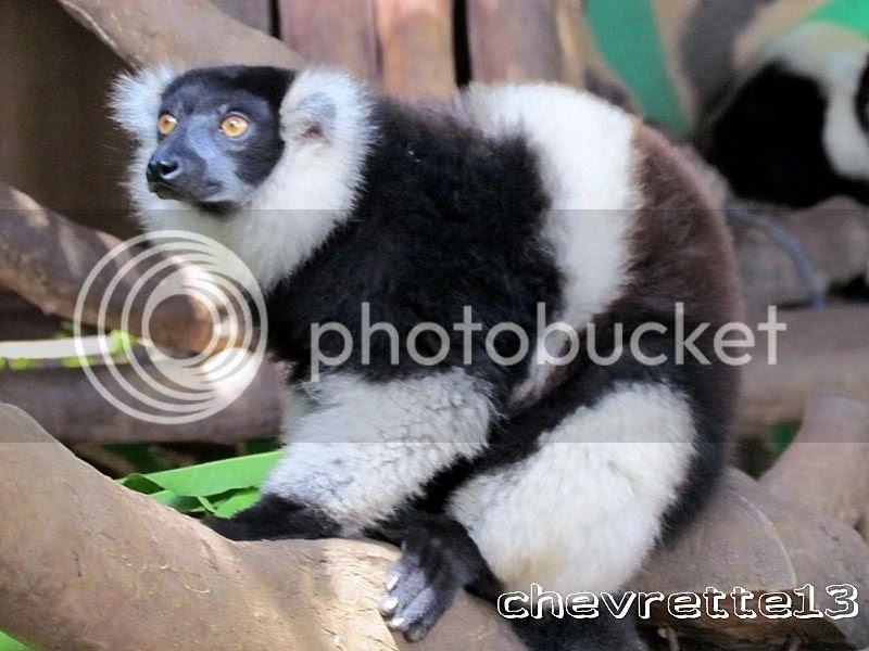 http://i1252.photobucket.com/albums/hh578/chevrette13/Madagascar/IMG_2341Copier_zps860fd5e4.jpg