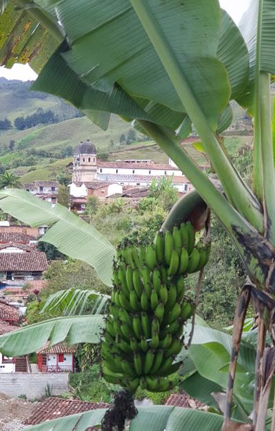 Imagen Concepción