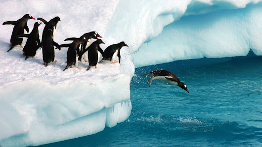 "Google Says Penguin To Shift To ""Continuous Updates"""