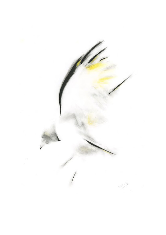 Black and yellow bird (2017) Charcoal drawing by Kellas Campbell