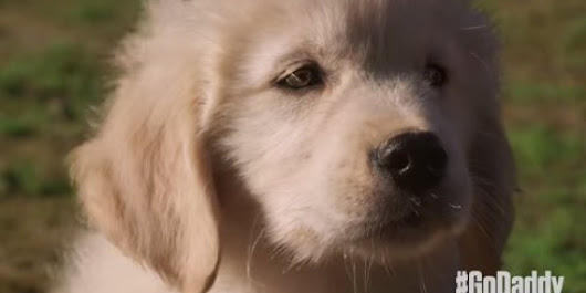 GoDaddy Pulls 2015 Super Bowl Ad After Slew Of Negative Feedback From Animal Advocates