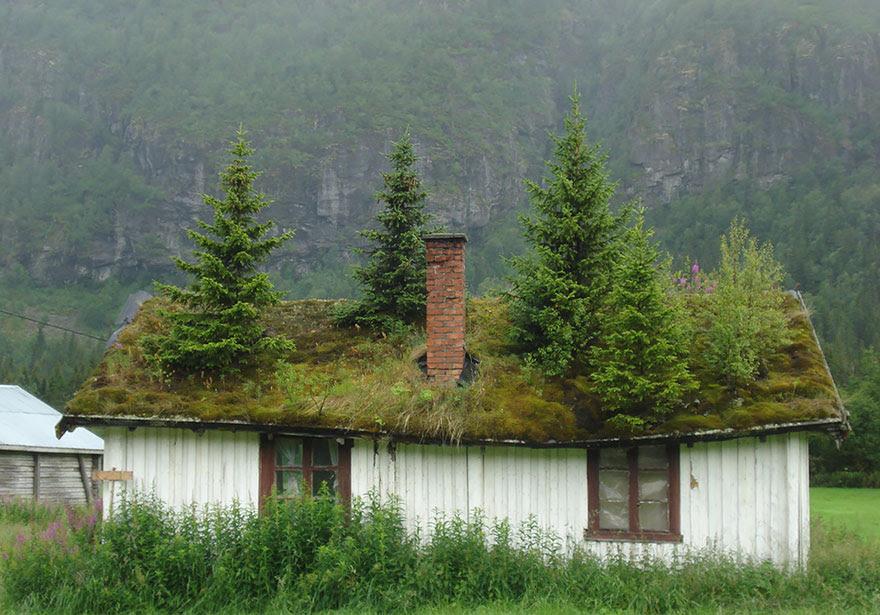 casas-cesped-tejado-escandinavia (9)