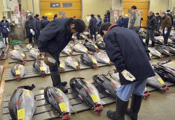 Bluefin tuna at a Tokyo fish market