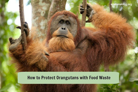 Palm Oil From Food Waste? A Potential Win For Rainforests