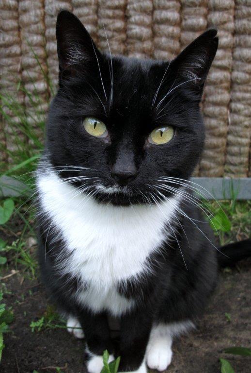 curious cat :-)