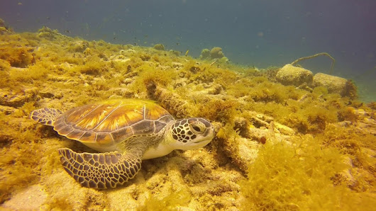 Awareness during your dives helps turtles - Relaxed Guided Dives