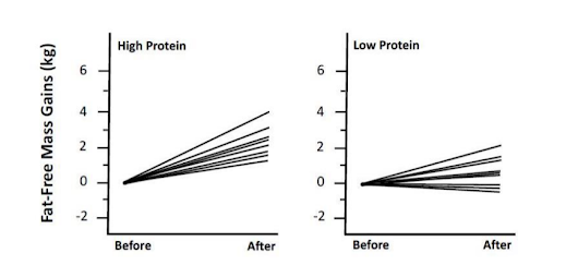 Protein Intake for Experienced Lifters