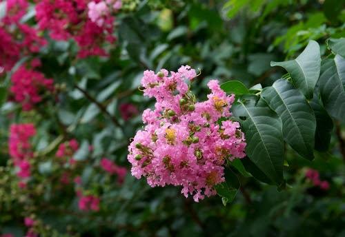 garden.1