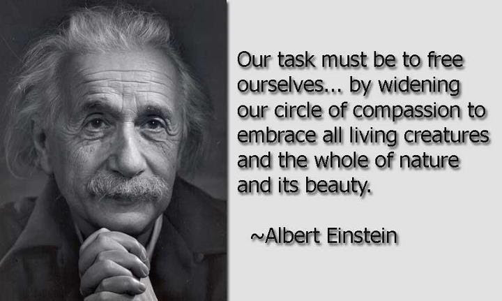 Albert Einstein said quot;Man Was Not Born to be a Carnivorequot;  Humane Decisions