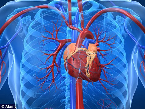 Damage: Excessive endurance exercise can do long-term harm to the cardiovascular system, U.S. scientists say