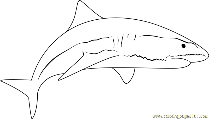 Sand Tiger Shark Coloring Page - Free Shark Coloring Pages ...