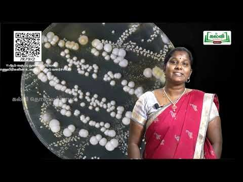 11th Micro Biology நுண்ணுயிரியல் உணவூட்டமும் வளர்ச்சியும் அலகு 6 Kalvi TV