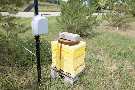 The Internet of Bees: Adding Sensors to Monitor Hive Health | Make: