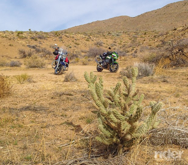 Only 45 minutes from the summit of Palomar Mountain, and the scene has changed from pines to cacti as you skirt the border of the Anza-Borrego Desert State Park