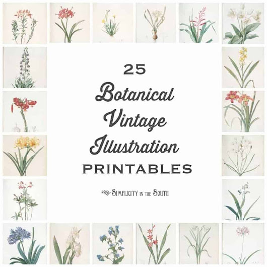 25 Vintage Botanical Illustrations: Free Printable Art - Simplicity in the South