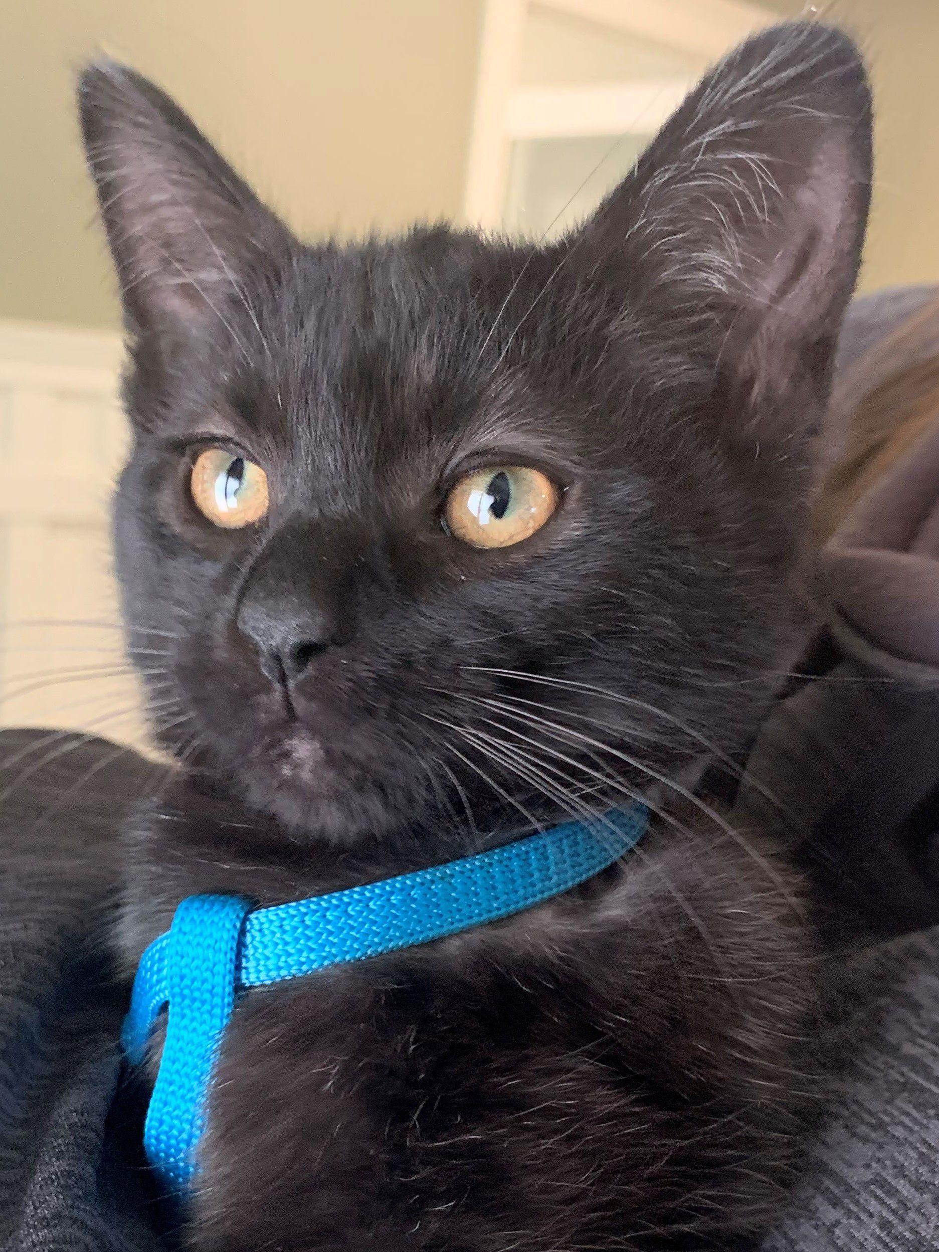 Carolina: Kittens Jackson Mi