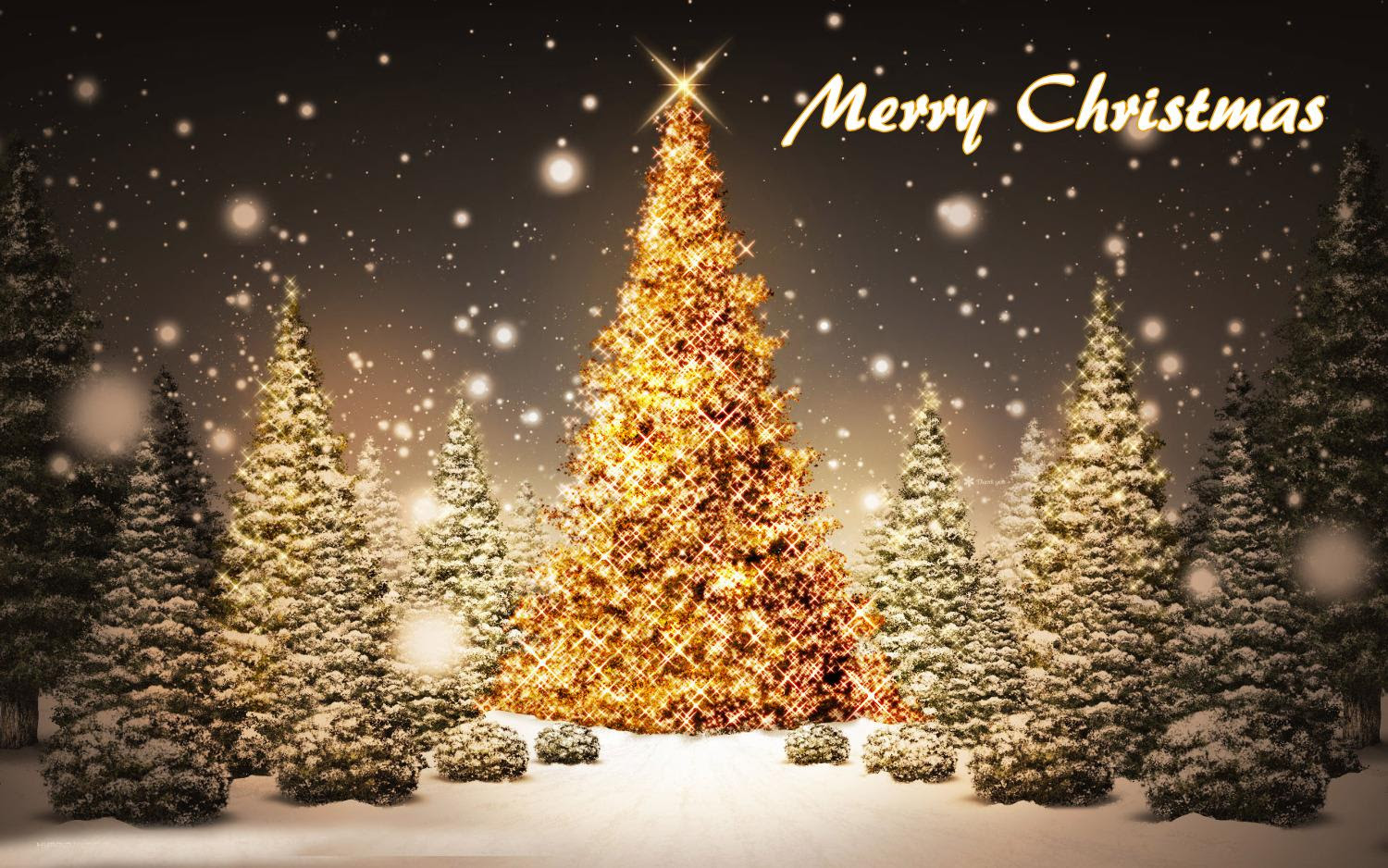 Inspirational Merry Christmas Tree Hd Images Top Colection For