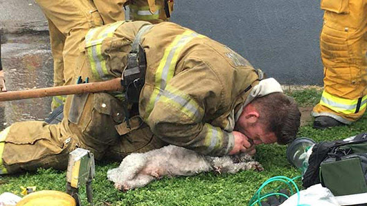 Firefighters save dog with mouth-to-snout resuscitation |