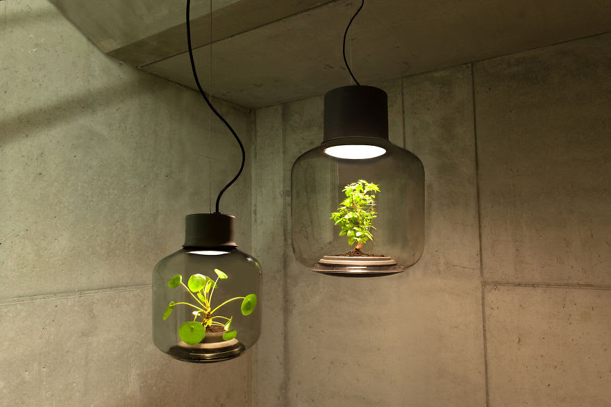 Lamps To Grow Plants In Windowless Spaces