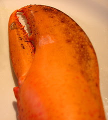 Magdalen Islands lobster