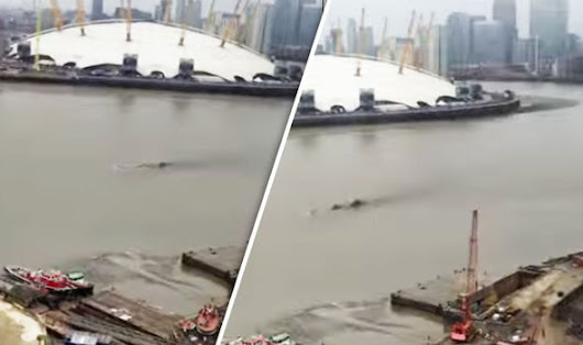 Loch Ness Monster? Does this shocking footage show a sea serpent swimming in the THAMES