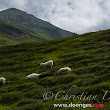 · Mountainscapes and Sheep