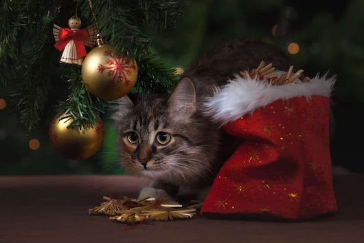 How To Pet Proof Your Christmas Tree! - International Elf Service