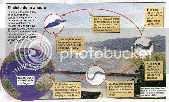 http://i132.photobucket.com/albums/q28/sobrado/Angula.jpg