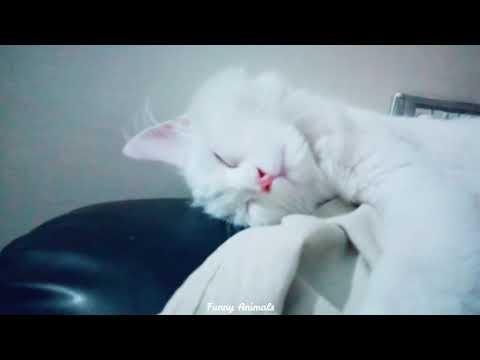 | Sleeping Cats |