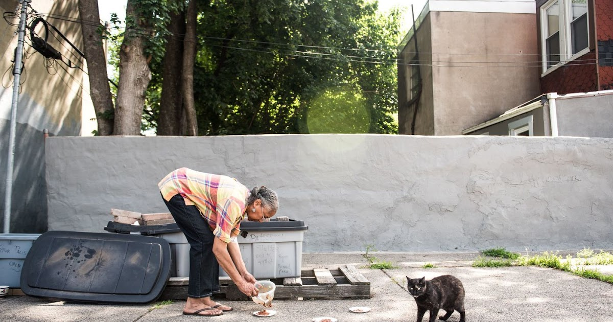 How To Get Rid Of Stray Cats In Your Backyard