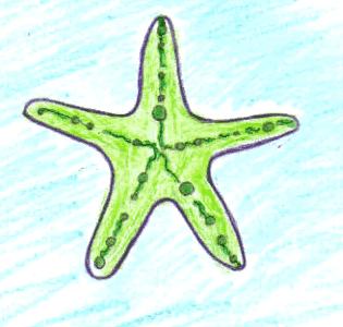 Aprender A Dibujar Estrella De Mar Eshellokidscom