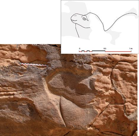 Cabeza de dromedario esculpida en bajorrelieve. Foto: CNRS/MADAJ, photo C. Poliakoff, relevé G. Charloux.