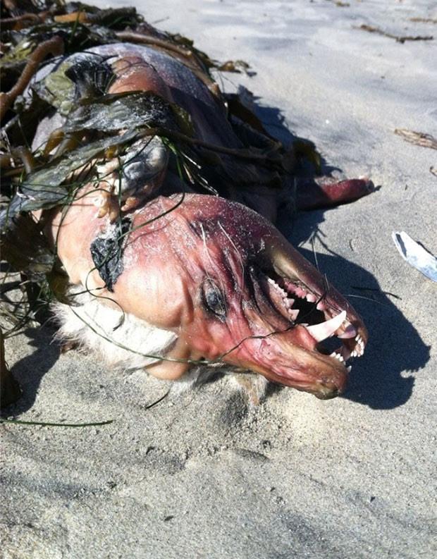 Criatura parecida tinha sido encontrada pelo americano Josh Menard (Foto: Reprodução/Facebook/Joshua Menard)