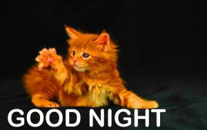 190 Funny Good Night Photos Hd Download Good Morning