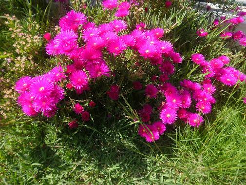 decorar meu jardim:PNEUS A DECORAR JARDIM DESTA VEZ QUIS OS PNEUS VELHOS DO MEU CARRO! A