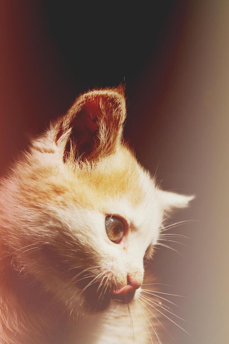 http://th04.deviantart.net/fs71/PRE/i/2012/266/f/e/cat_by_lexandra13-d5fm85f.jpg