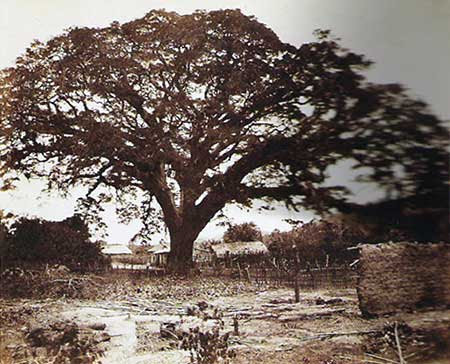 File:Saman de Guere 1857.jpg