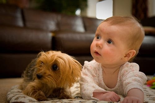 Baby and Puppy meet for the first time - Super Cute Video